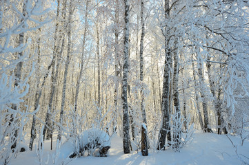 winter forest, Russia