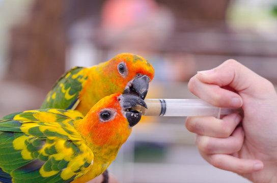 Women feeding birds through a syringe