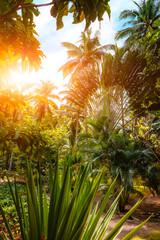 Busuanga Paradise Garden