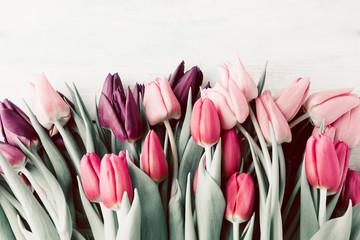 Obraz Spring tulips lying on white wooden table background - fototapety do salonu