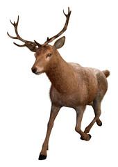 3D Rendering Male Deer on White