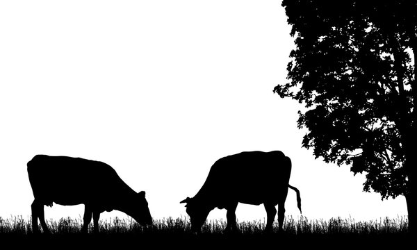 Realistic illustration with two silhouette of cow on pasture, grass and tree, isolated on white background, vector