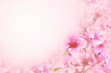 Spring blossom or summer blossoming rose (rosehip), toned, bokeh flower background, pastel and soft floral card