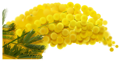 Yellow mimosa branch flowers bouquet spring holiday