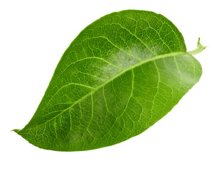 Pears leaves isolated on white