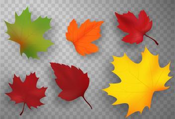 Autumn leaves set isolated. Vector illustration.