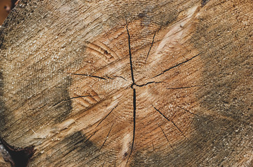 Closeup of old single round sliced wood log with growth rings, cracks and scratches. Brown wooden background with cutting tree trunk, country concept for warm winter stove heating, sauna, bath house
