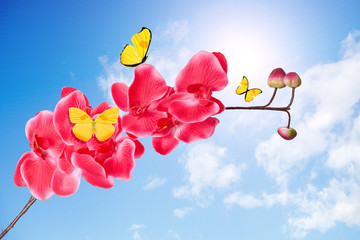 orchid branch with pink flowers with yellow flying tropical butterflies against the sky with clouds