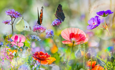 Obraz summer meadow with butterflies and red poppies - fototapety do salonu