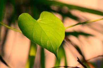 green heart shape leaf among the pink natural background