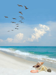Wall Mural - Beautiful Sea Shells on a White Sand Beach as a Flock of Pelicans Fly By