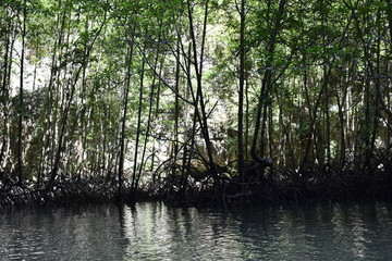Kayak trip into the mangrove forest in Ao Thalaine in Krabi in Thailand, Asia