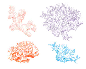Corals hand drawn set. Vector illustration.