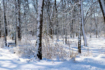 Beautiful winter morning after snowfall background. Scenic snowy landscape with forest covered by fresh snow during sunrise. Wisconsin nature background, Midwest USA.