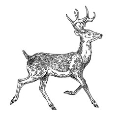 Running deer. Sketch. Engraving style. Vector illustration.