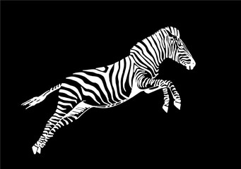 Graphical hand-drawn zebra isolated on black background,vector sketch ,tattoo,logo