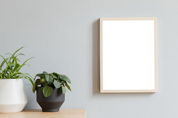 Minimalistic botanical room interior with mock up photo frame on the brown wooden table with beautiful plant in design hipster pot. Grey walls. Stylish and floral concept of mock up poster frame.