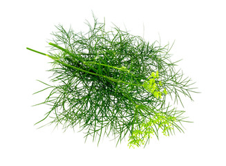 Dill bunch isolated on white.  Dill herb leaves. Flowering plant