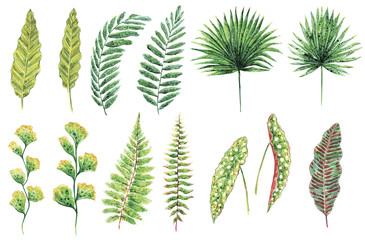 Hand drawn watercolor set of various green leaves, tropical and forest plants, isolated on white