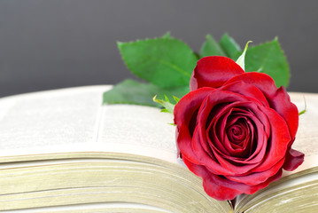 Mothers Day card with red rose on the book