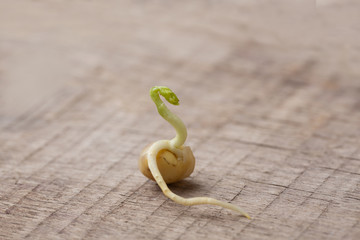 Sprouted mung beans. Sprout, root, stem, leaf. New life. Macro.