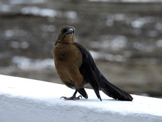 Panama City birds. America