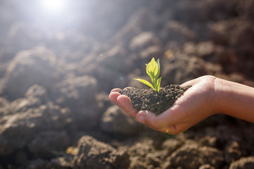 Young green sprout with earth on hands
