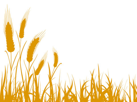 Agriculture wheat illustration for design - stock vector