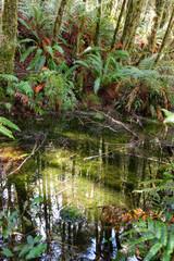 Pond in natvie bush, Fjordland, South Island, New Zealand