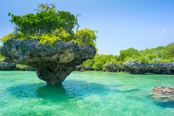 stone rock with trees in lagoon in Zanzibar