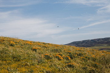 desert landscape with birds and wild flowers