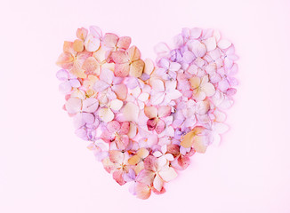 Flowers of a hydrangea in the form of a heart on the pink background