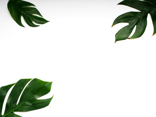 Tropical palm leaves spring