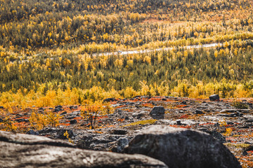 Car on a shiny road among the colorful autumn taiga forest on a sunny day. Panoramic view from the mountain with stones on the foreground. Northern landscape at Kola Peninsula, Murmansk region, Russia