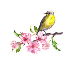Bird in spring flowers. Springtime blossom, cherry, apple, sakura branch. Water color