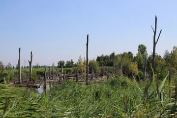 Isolated island with burned trees for birds at the Zevenhuizerplas in Oud Verlaat in the Netherlands