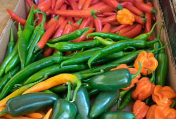 Mix of hot red, yellow and green chilli peppers at farmers market