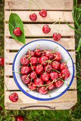 Juicy sweet cherries on the white metal bowl
