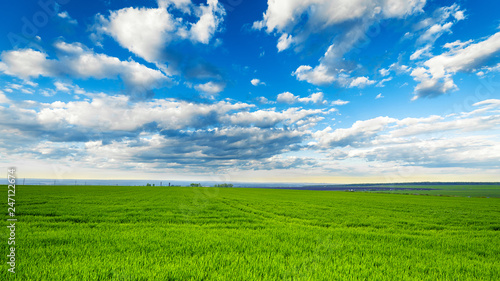 Fototapete rural landscape, green field grass with a blue sky and clouds