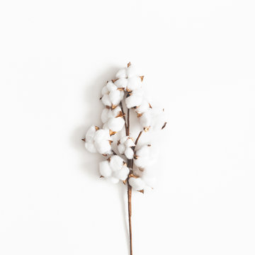 Flowers composition. Cotton flowers on white background. Flat lay, top view, square