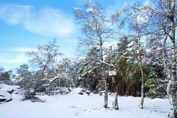 sentier des gorges de Franchard sous la neige dans la forêt de Fontainebleau