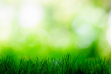 Green bokeh blurred shining light abstract background.