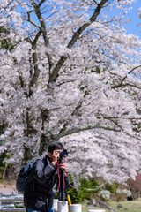 Happy Young man traveling take a photo with beautiful pink Cherry Blossom  at Kawaguchiko lake, Yamanashi. Spring Season. landmark and popular for tourist attractions in Japan