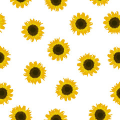 Seamless pattern yellow Sunflower on white background, vector eps 10