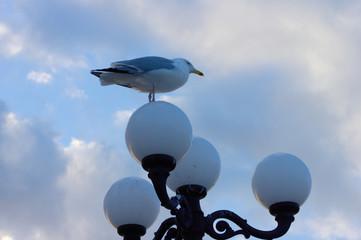 Seagull on street light of Brighton Pier. Fotomurales