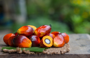 Palm Oil fruit of vegetable oil on old wooden floor.