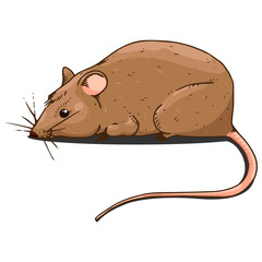 Mouse hand drawn. Vector of cartoon mouse. Funny rat.