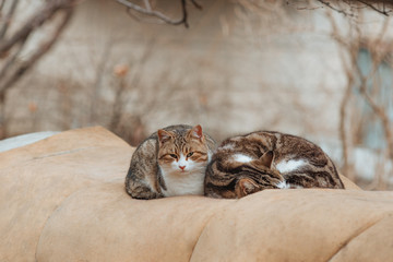 two cats are resting on the street.