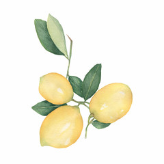 Lemons branch isolated on white background. Hand drawn watercolor illustration.Fresh lemon with green leaves. Food element for your design.