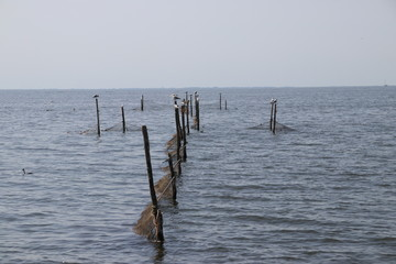 Fish pods for catching eels in the IJsselmeer at Urk in the Netherlands